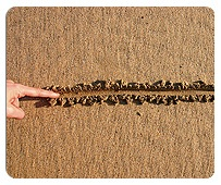 Disrespectful Child Behavior: Where Do You Draw the Line?